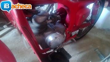 Immagine 5 - Moto Caproni Capriolo