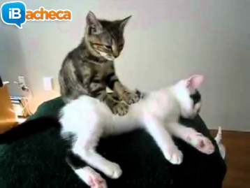 Immagine 1 - Massaggi da italiano